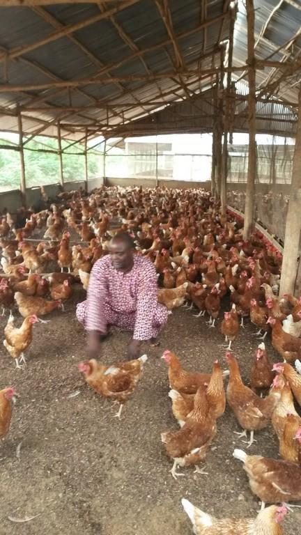 Serge, responsable de l'orphelinat sur l'exploitation avicole
